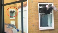 18 fura szomszéd ,aki soha nem hagyja unatkozni  a környéken lakókat