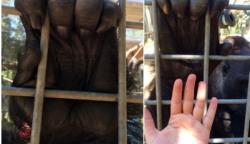 21 tárgy és élőlény, aminek a méreteit gyakran alábecsüljük