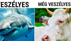 16 tény az állatokról, melyekről jó sokáig még az állatorvosoknak sem volt tudomása