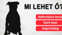 Kvíz: 10-ből csak 1 ember képes felismerni ezeket a kutyusokat a sziluettjük alapján
