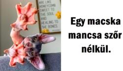 20 fénykép állatokról, amelyek bizonyítják, hogy az anyatermészetnek lenyűgöző humorérzéke van