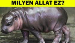 Teszt: Meg tudod tippelni, hogy ez a 15 bébi állat milyen fajta vadállat?
