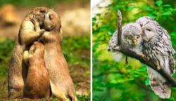 19 szerelmes állat, amelyek még egy fagyos szívet is képesek megolvasztani
