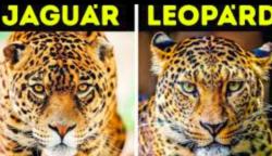 16 állat páros, akiket szinte mindig összetévesztjük egymással