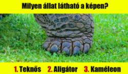 18 állatos találós kérdés: Vajon, te megismered a tappancsok gazdáit?