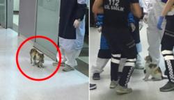 Egy anyamacska, aki kórházba vitte beteg kölykét – A fotók futótűzként terjedtek a neten