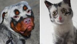 15+ vitiligós állat, amelyek kivételesen gyönyörűek