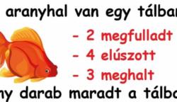 Az aranyhal rejtély próbára teszi az agyunkat