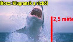 11 mítosz a cápákról, amit az emberek mind a mai napig vakon elhisznek