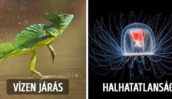 12 valóban létező állat, aminek a különleges képességét bármelyik szuperhős megirigyelné