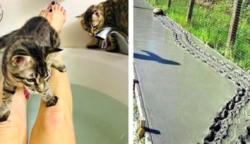 """20 állat, akiket elnyerhetnék az """"Év bajkeverője"""" díjat"""