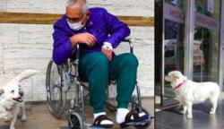 Megható videó – Napokig a kórház bejáratánál várta beteg gazdáját a hűséges kutya