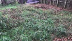 A férfi vett egy romos házat, elvadult kerttel: az óriási gaz alatt olyan kincset talált, ami meghaladta a ház értékét is