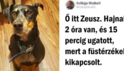 15 fénykép, amely igazolja, hogy a boldogság kutyákban mérhető