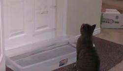 Vizet tett ajtó elé, hogy macskája ne tudjon bemenni: a cica fergetegesen oldotta meg a problémát