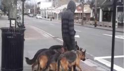 Úgy tűnik, mintha a kutyáit sétáltatná — Amikor közelebbről megnéztem, szóhoz sem jutottam